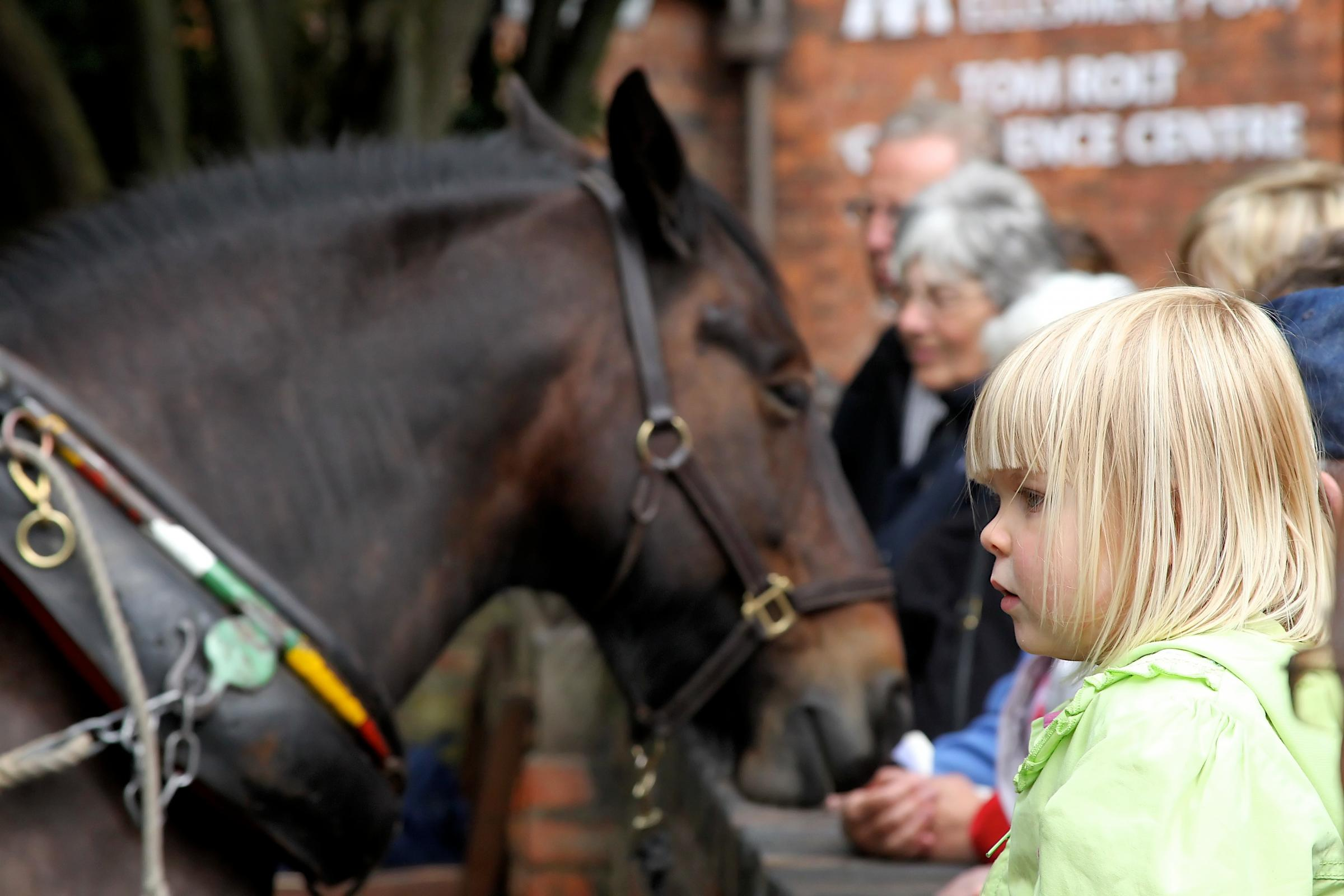 Popular 'Horses at Work' event returns to the National Waterways Museum in Ellesmere Port