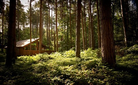 Dozens of eco-cabins to be built at Delamere Forest allowing visitors to spend the night