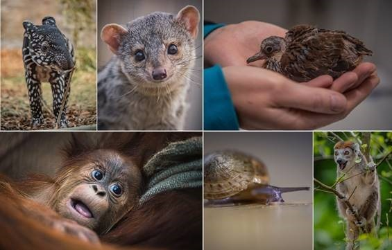 Latest headcount reveals Chester Zoo is home to more animals than ever before