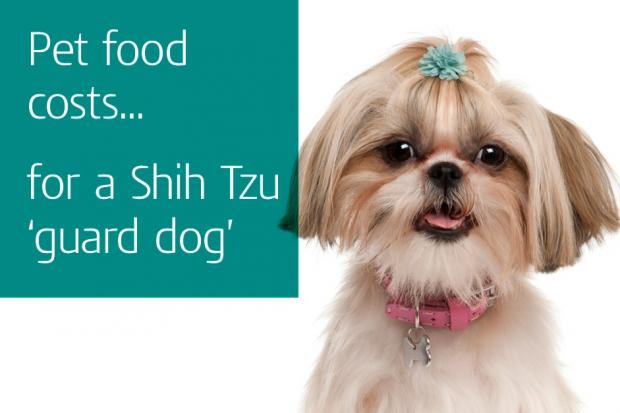 Pet food costs... for a Shih Tzu 'guard dog'
