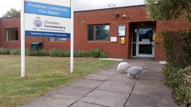 The two birds at Frodsham Police Station. Image: Frodsham Police