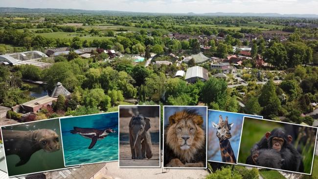 Chester Zoo collage.