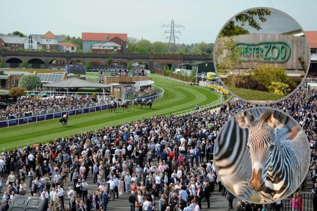 Chester Racecourse has become an official supporter of the city's zoo.