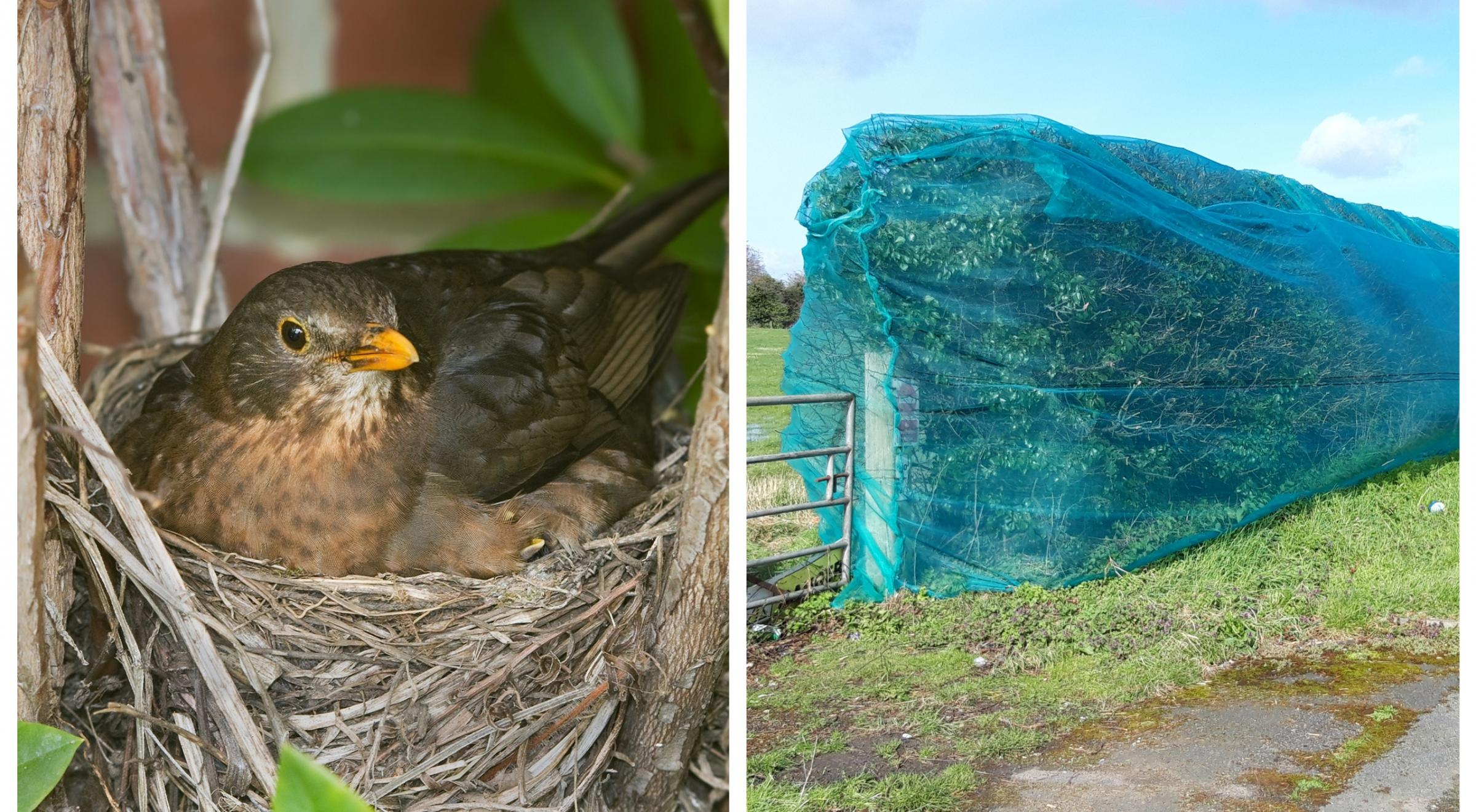 Redrow and Taylor Wimpey are using nets to stop birds from nesting at their Wrexham Road site.