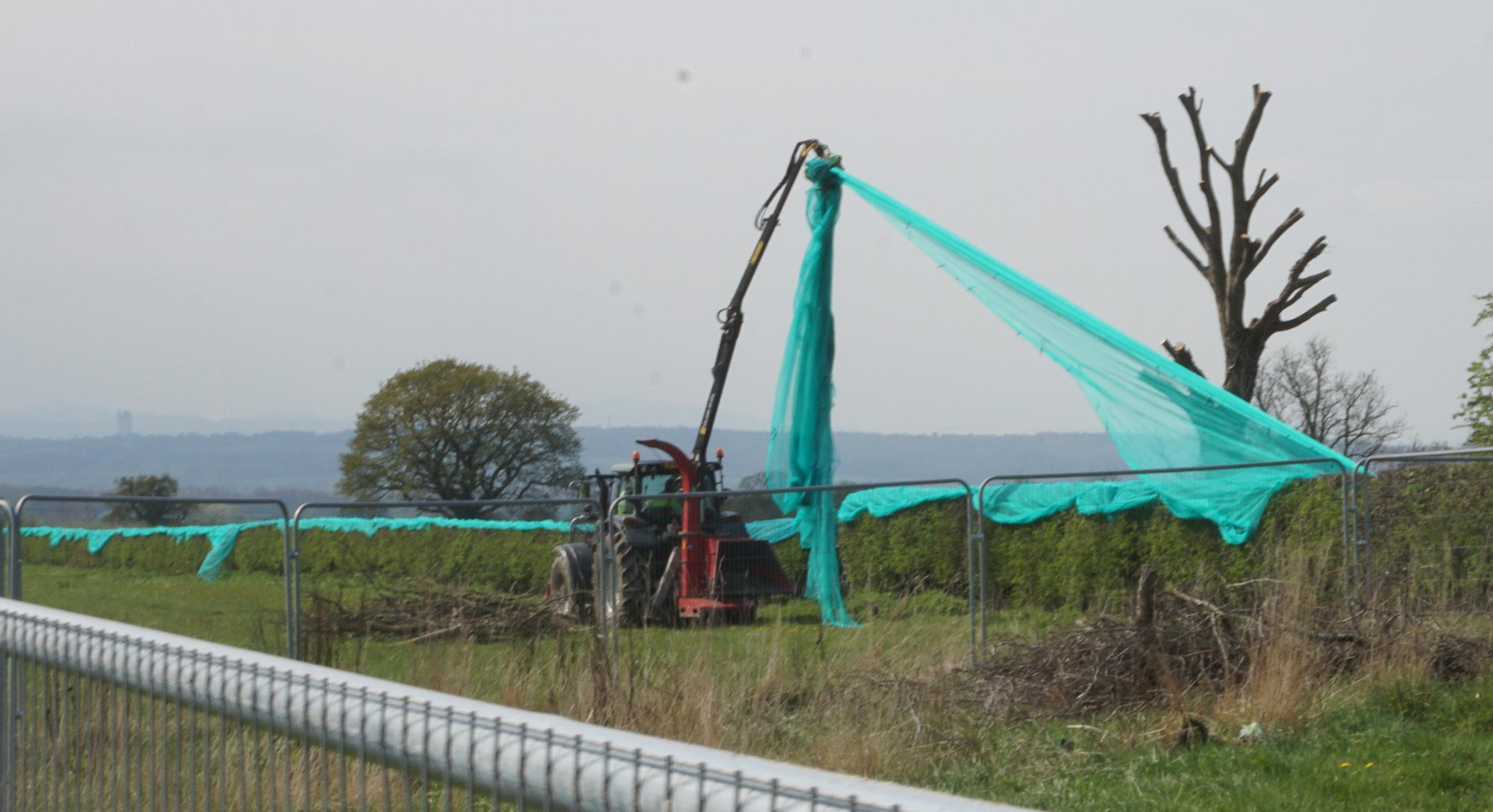 Nets being removed from hedges at Wrexham Road. Picture by Andy Scargill.